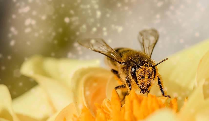 Bee and Flower Pollen
