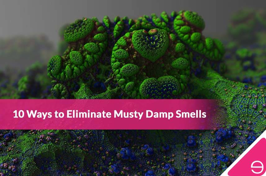 10 Ways to Eliminate Musty Damp Smells
