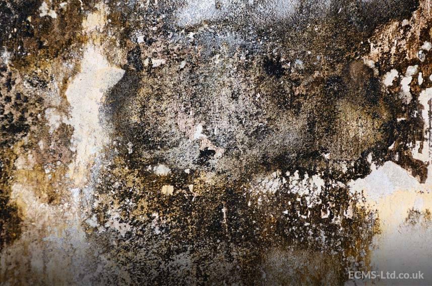 Mouldy Walls